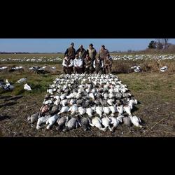 snow goose hunt l goose hunts l snow goose hunting